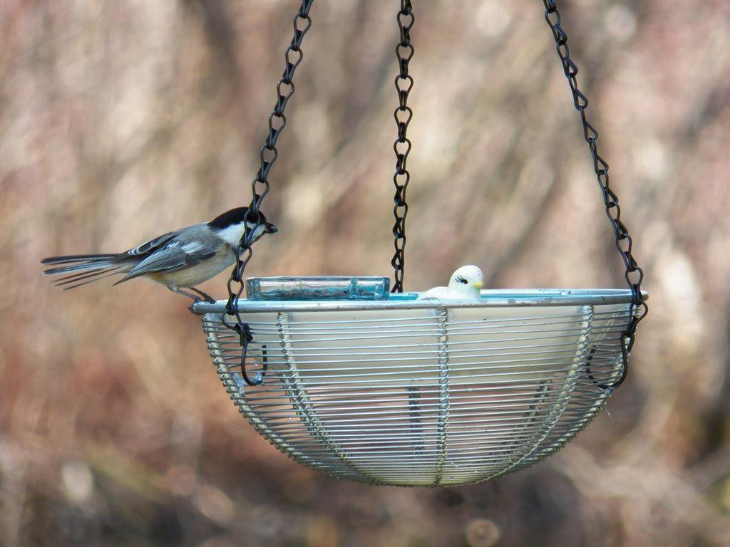 Diy hanging bird bath with images hanging bird bath
