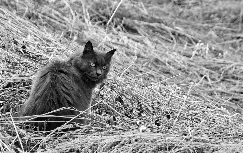 hunter... by Nikola Matovina on 500px