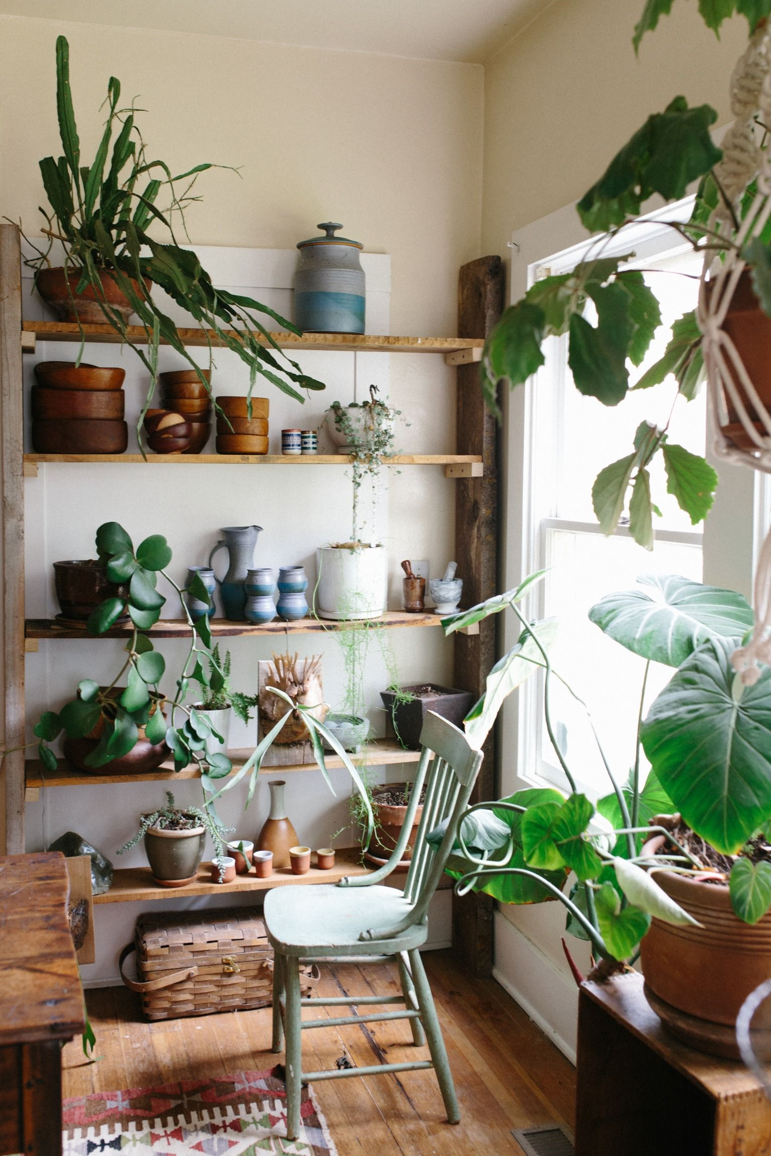 Plant Shelving Indoor Uo Guide Small Spaces Gardening Green Thumb Small