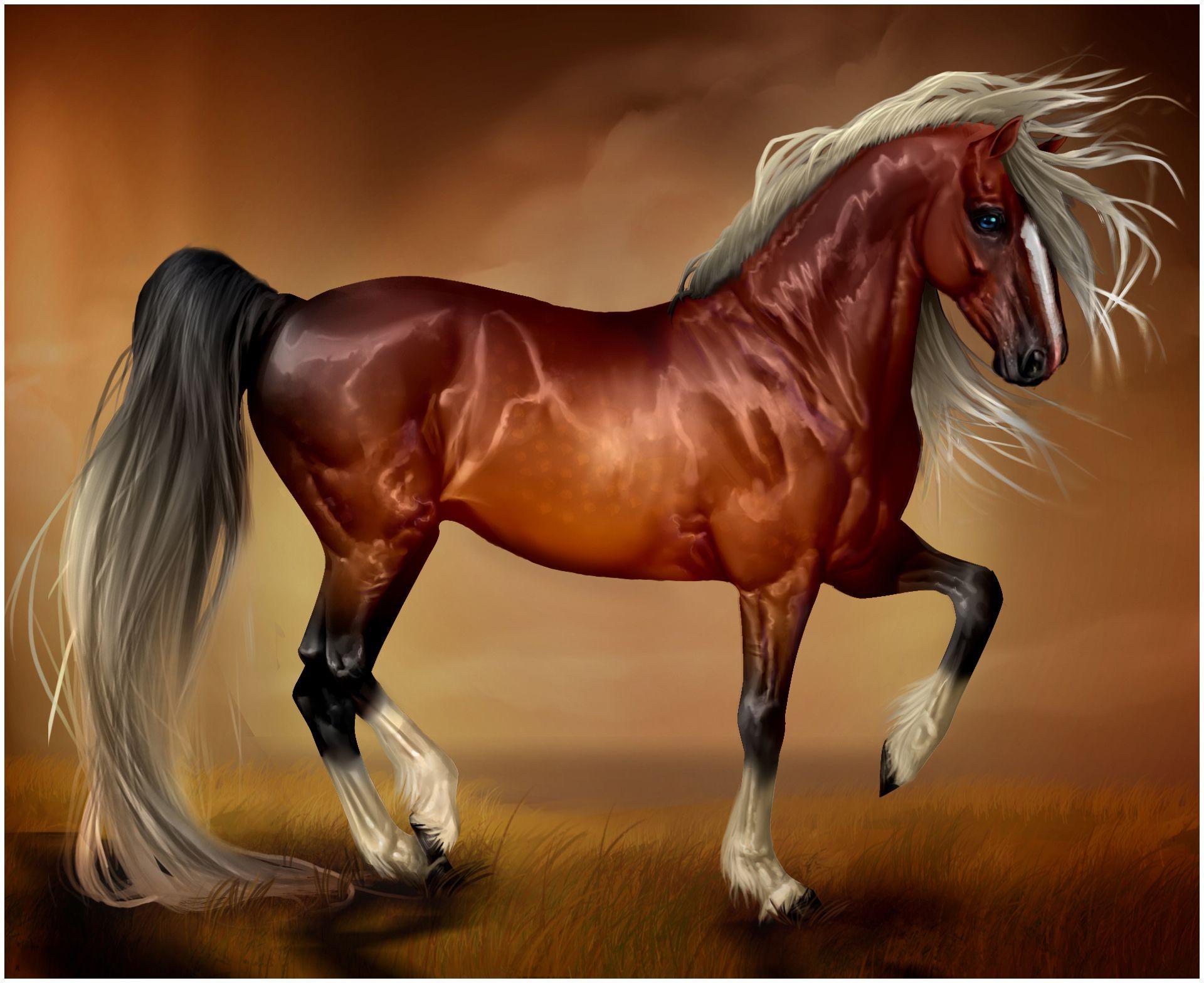 Popular Wallpaper Horse Pinterest - 41011171f42574ffadaba2b17e8a5fed  You Should Have_363712.jpg