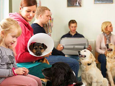 Solving More Common Health Industry Complaints Pet Clinic Vet Visits Vets
