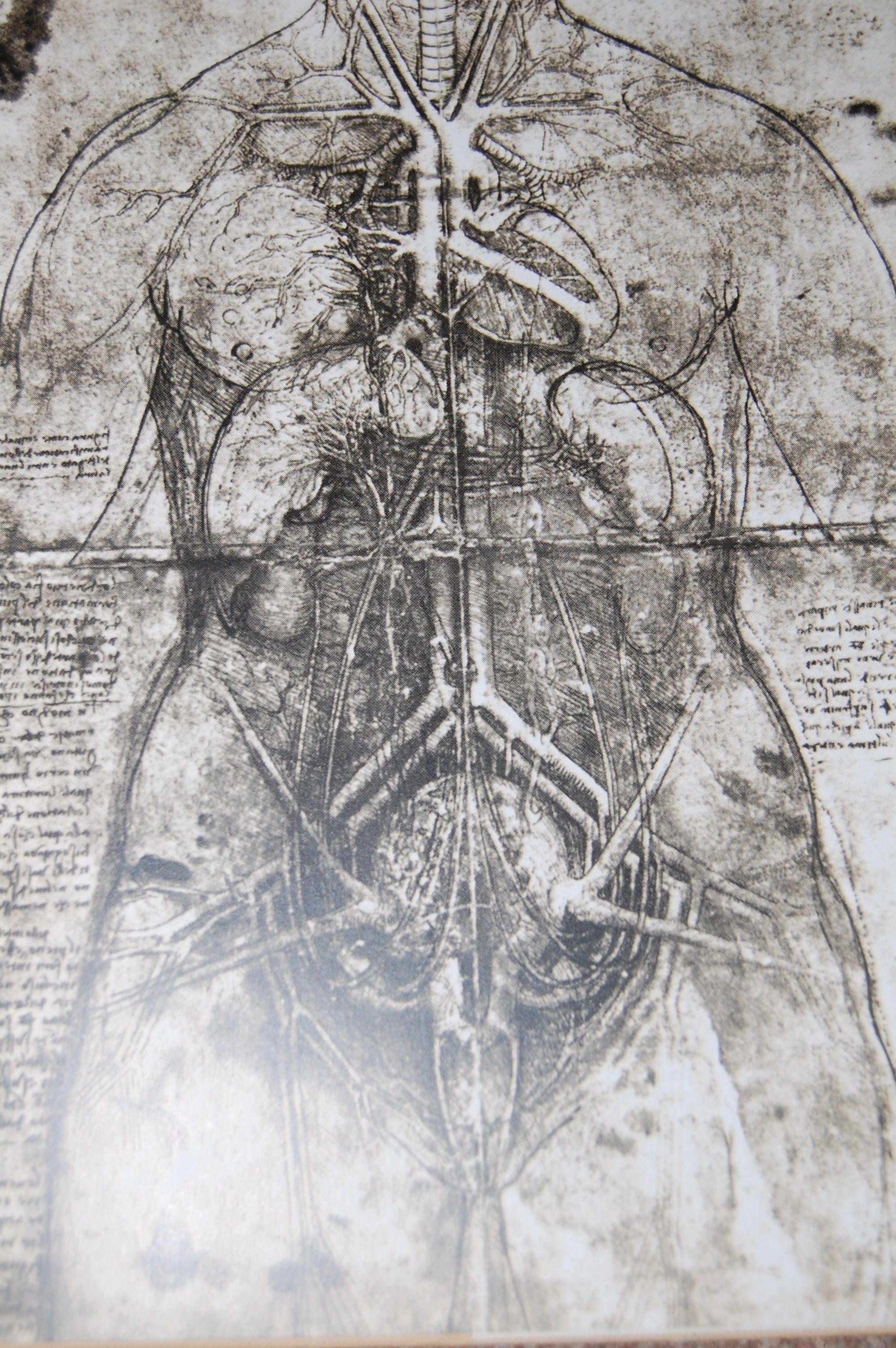 Leonardo Da Vinci: Anatomical drawings; appropriate visual language ...