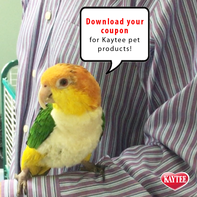 Last Chance To Save Download Your 2 Off Coupon For Select Kaytee