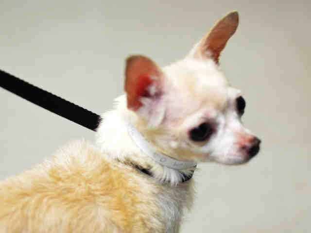 Barbie A1122609 Please Rescue Me Dogs Small Dog Breeds