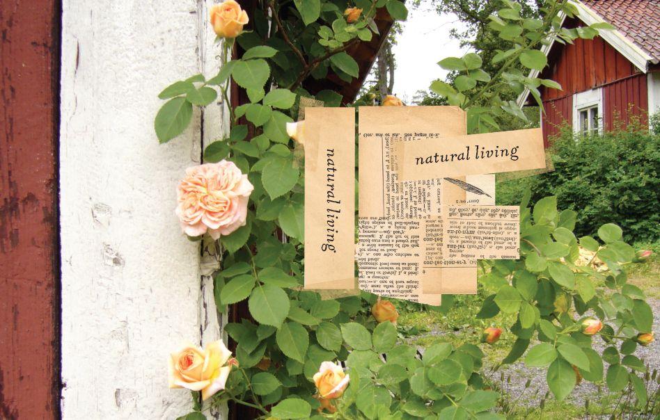 natural living april elcich