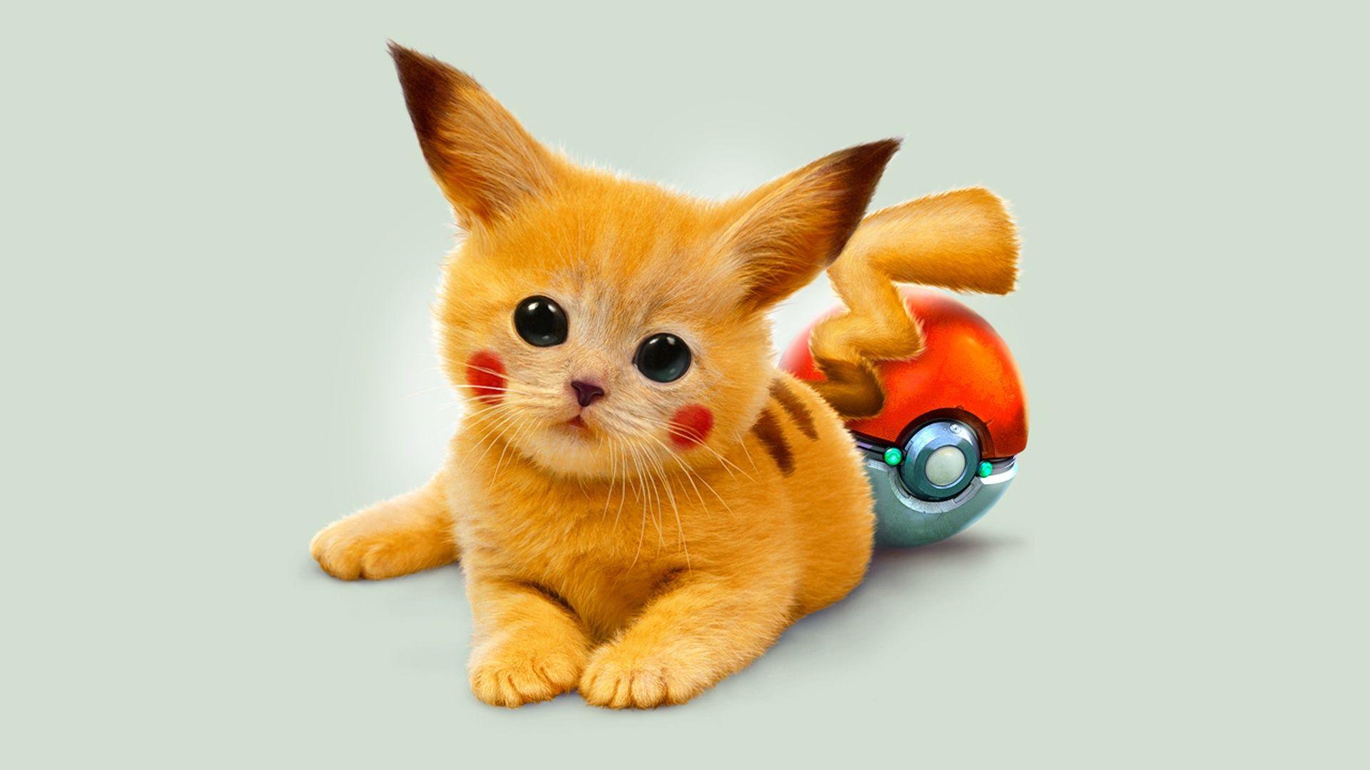 Pokemon Cartoon Pikachu Hintergrundbilder 1920x1080 Susse Tiere Baby Katzen Katzenhumor