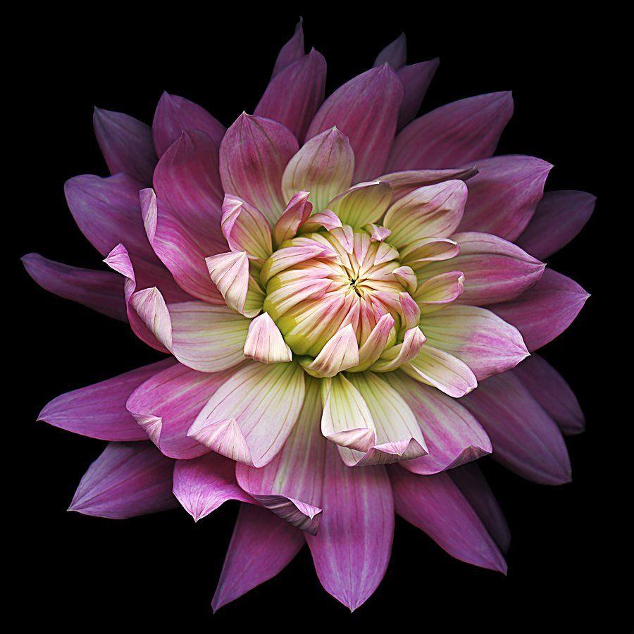 Kate Scott PLANTAS JARDINS Pinterest Flowers and Gardens