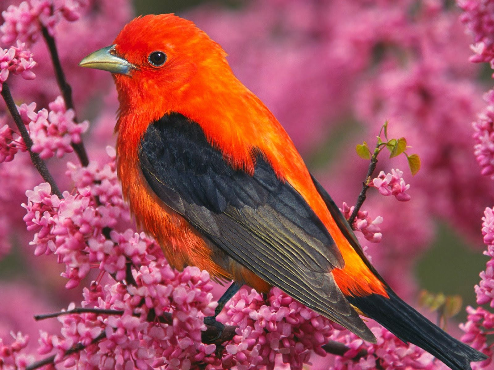 Top 10 Most Beautiful Birds In The World 2014