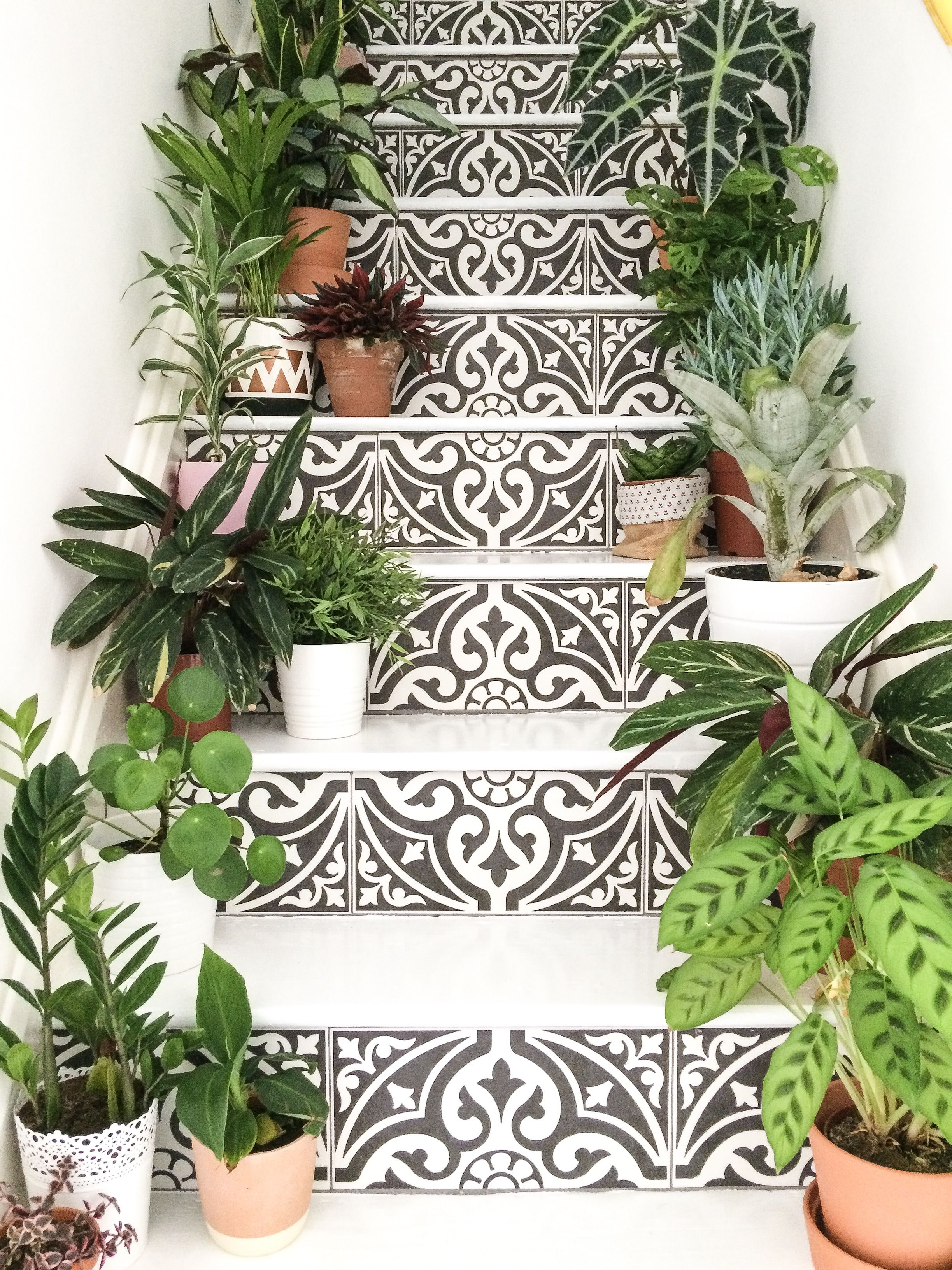 Houseplants veg design pinterest houseplants plants and tile
