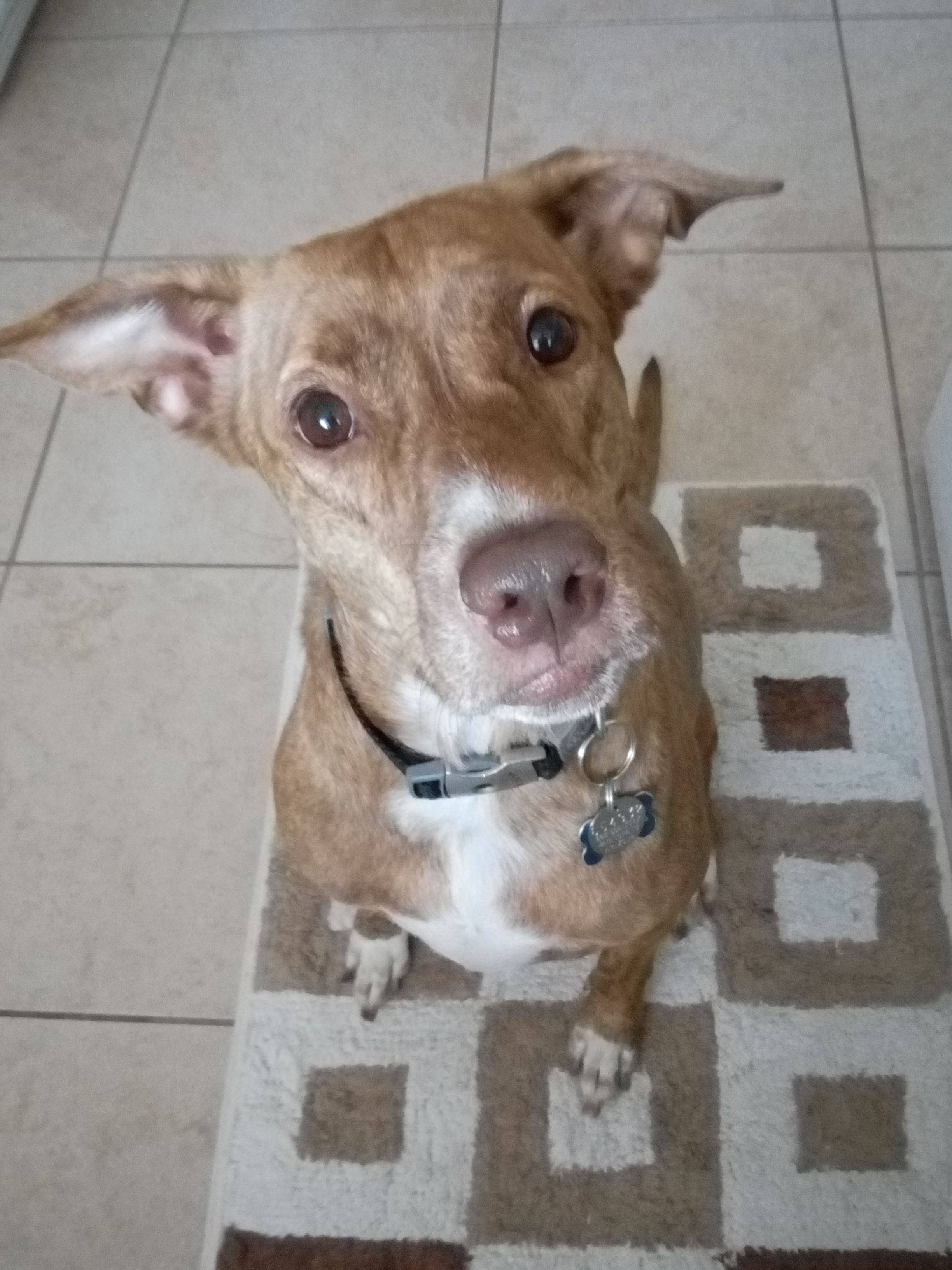 Meet our latest success story, Amber! Her new mom writes