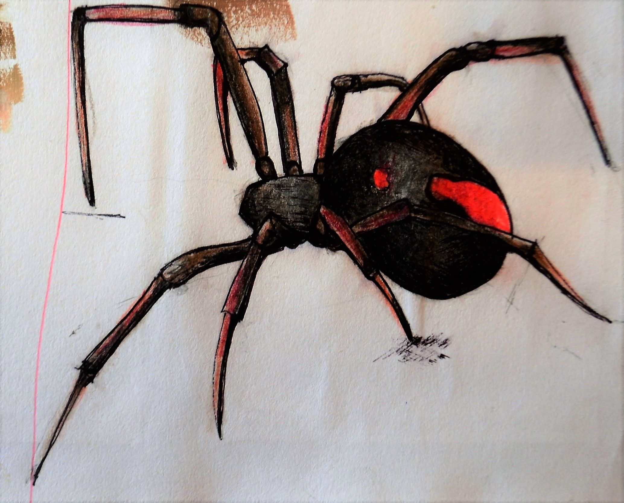 diagram of redback spiders free download wiring diagrams on  for redback spider, pencil and ink drawing pinterest redback spider on spider red markings on back at
