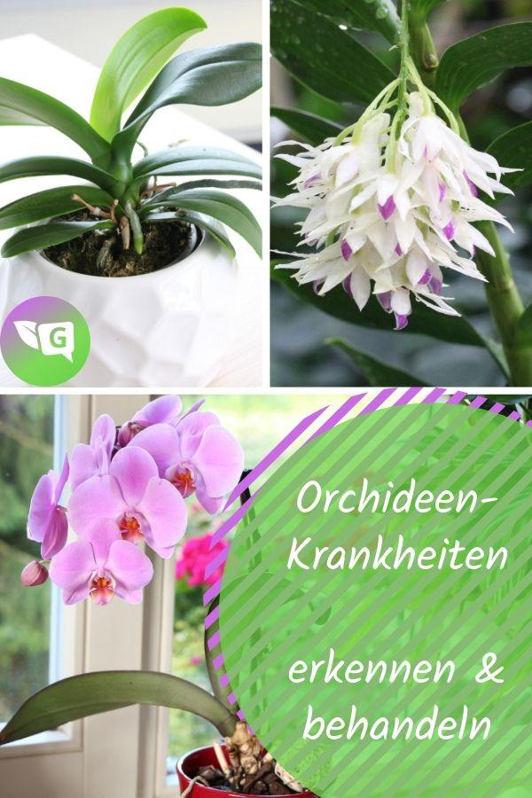 7 häufige Orchideen-Krankheiten