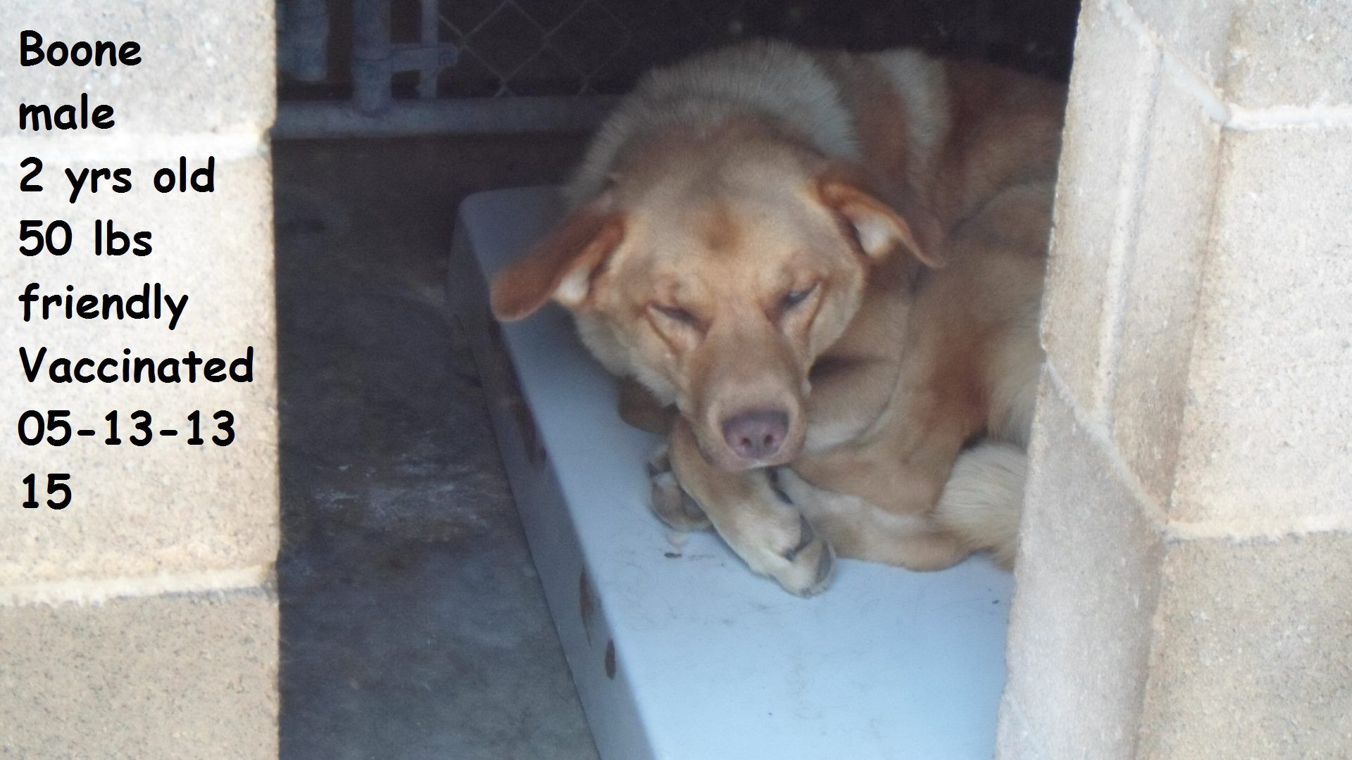 #URGENT - Hazard, KY I'm BOONE and I'm a male 2 year old dog with lots of love to give, can you give me a new home please?