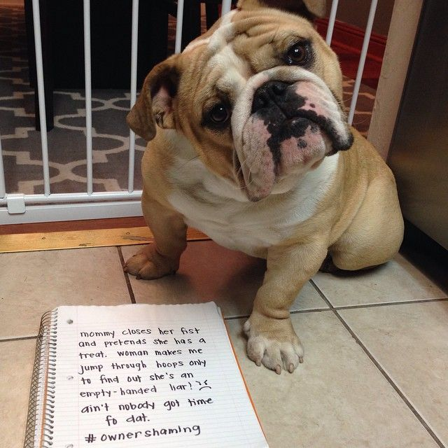 These Bulldogs Are Shaming Their Owners And It S Hilarious