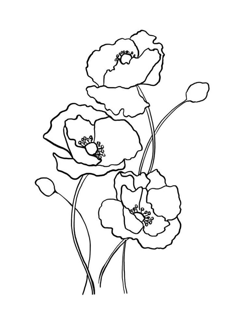 Botanical Line Art Print, Poppy Flowers Print, Scandinavian Decor ...