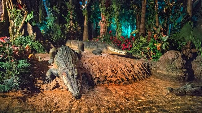 Rainforest scene on Living with the Land | Epcot ...