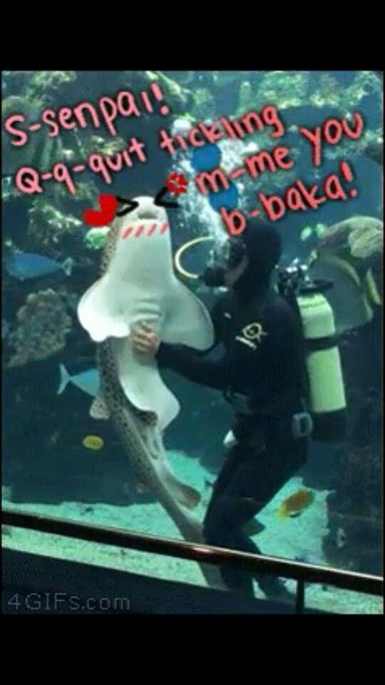 4106fdc7de15502809eebb7373d292d3 tsundere shark and diver senpai otaku memes pinterest tsundere