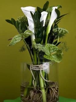 Szklane Naczynie Odslania Niezwykly Ksztalt Korzeni Ktore Odkrywaja Przed Nami Sily Drzemiace W Przyrodzie Kwiaty Cantedeski Zantedeschia Caladium Glass Vase