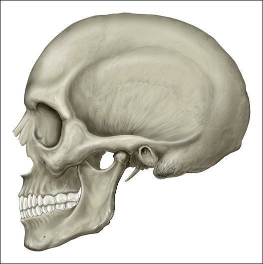 15--1330461-rotation of 3d skeleton.anatomy,human,medical,body, Skeleton