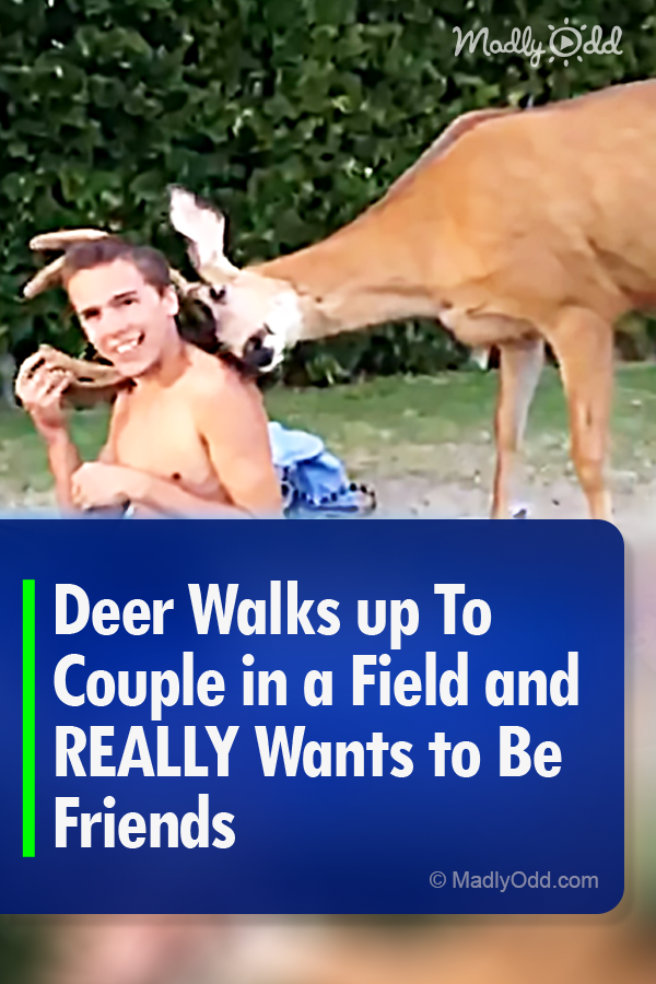 The deer seems to very interested in the guy and the way
