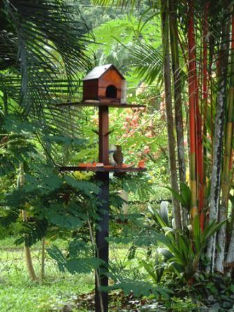 birds eating fruit | Hotel La Garza: Birds eating fruit at breakfast