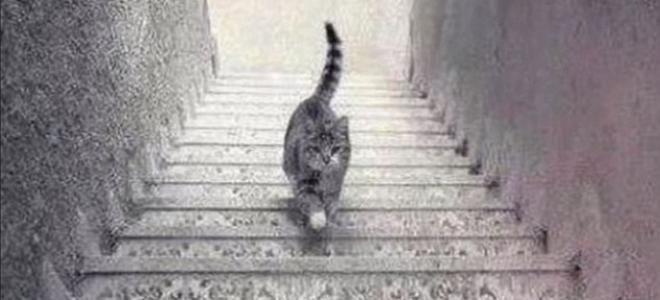 illusion d 39 optique ce chat monte ou descend l 39 escalier illusion optique et escaliers. Black Bedroom Furniture Sets. Home Design Ideas