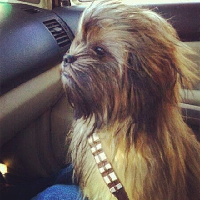 Awesome dog costume! #dogcostume #halloween #starwars # ...