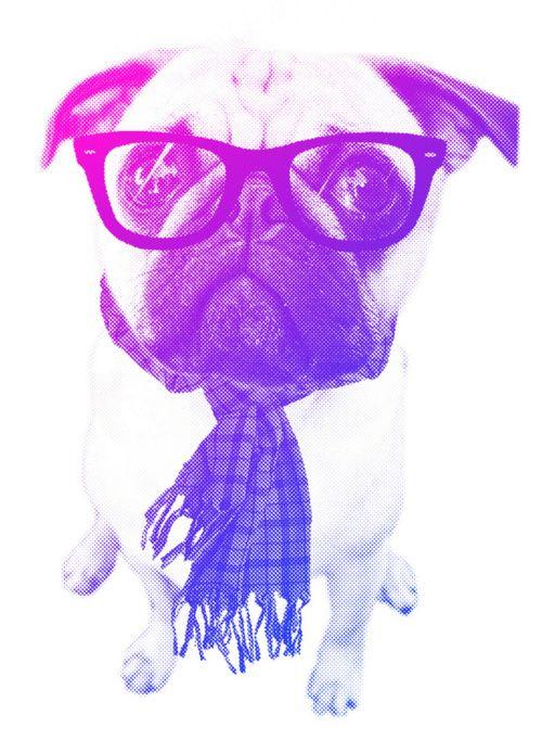 Pugs All Over Pugs For President Hipster Dog Pugs Pug Love