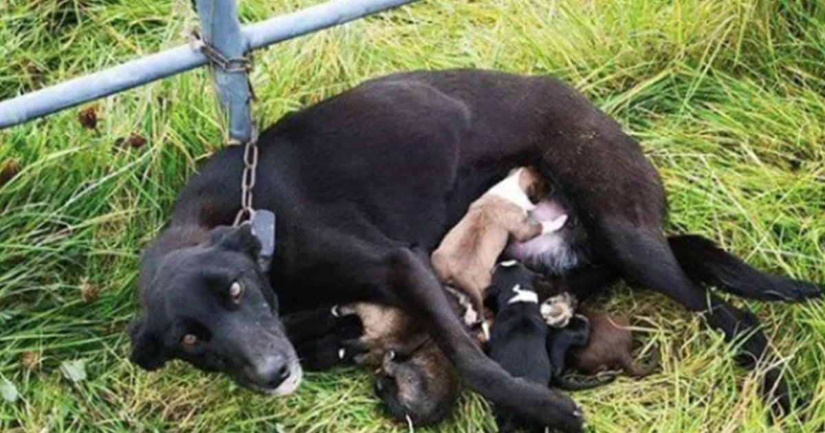 11+ Roscommon county animal shelter ideas