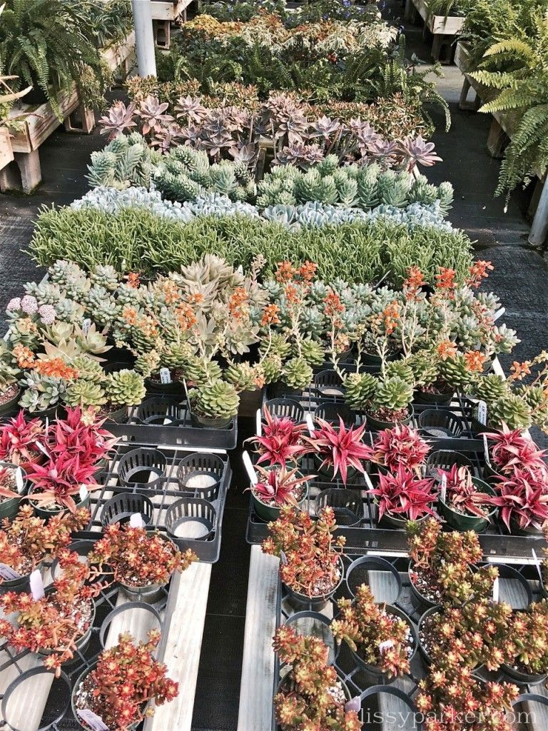 and even more colorful succulents