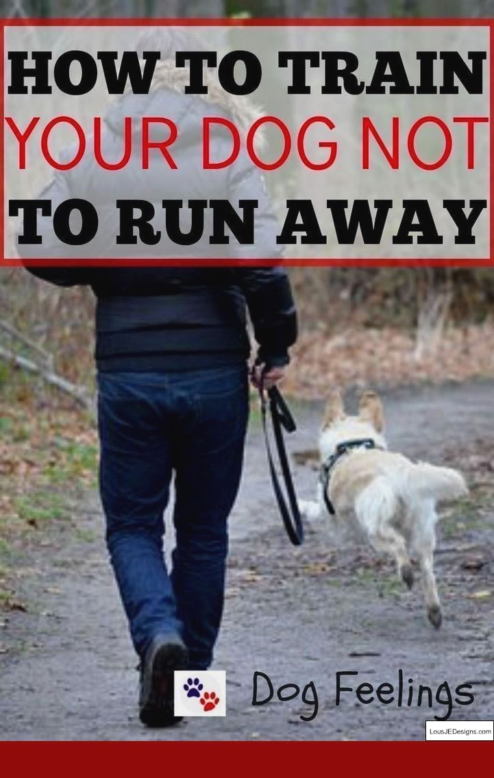 How to train your dog to walk on a leash without pulling