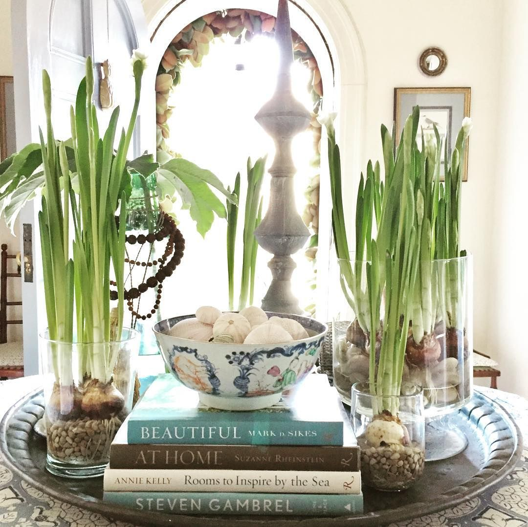 Decorating Tray vignette with paperwhites Heather