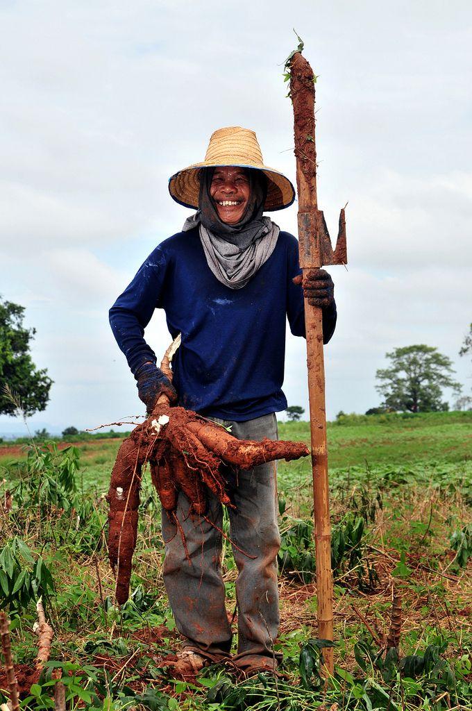 Cassava farmer, Thailand  (The International Center for Tropical Agriculture, flickr)