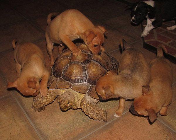 http://wwwblogtche-auri.blogspot.com.br/2014/02/paraiso-na-terra-um-refugio-para.html  Paraíso na Terra. Um refúgio para animais em que mais de 60 animais de diferentes raças vivem juntos