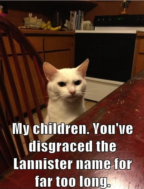 Pin by SashaSong31 on random | Funny cat pictures, Funny
