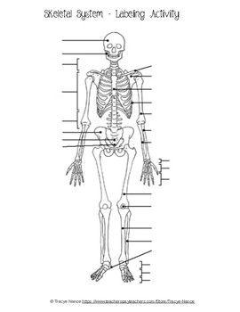Skeletal System Labeling worksheet   Skeletal system ...