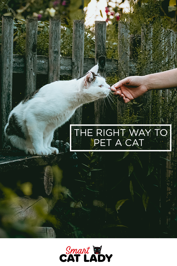 Here S The Right Way To Pet A Cat Pets Cats Cat Behavior