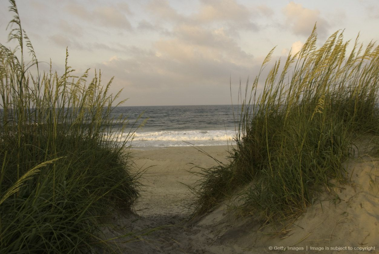 Sea Oats And Grasses Grow On Sand Dunes Nc Landscape Coastal Carolina Places To Go