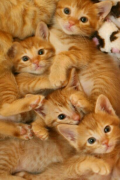 Pin By C M On Cats Sweet Crazy Cute Cats Pretty Cats Cats Kittens