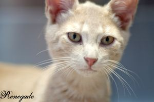 Adopt Renegade On With Images Cat Adoption 4 Month Old Kitten Kittens