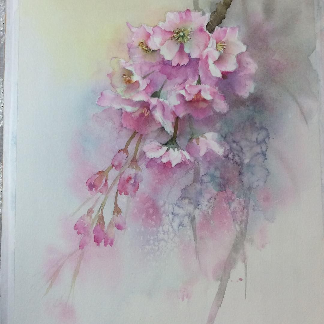 Cherryblossom Watercolorpainting Watercolor Watercolors Flower