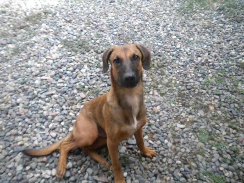 Adopt Luke on Dogs, Shepherd mix dog, Animal rescue