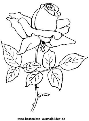 ausmalbild rosen 4 in 2020   ausmalbilder, malvorlagen blumen, mandala malvorlagen