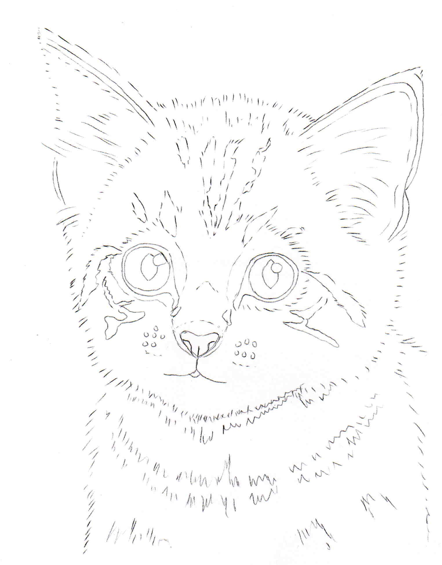 kitten line drawing