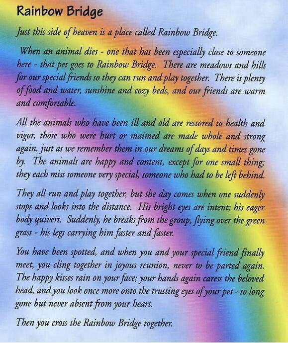 Rainbow Bridge Rainbow Bridge Poem Rainbow Bridge Pet Poems