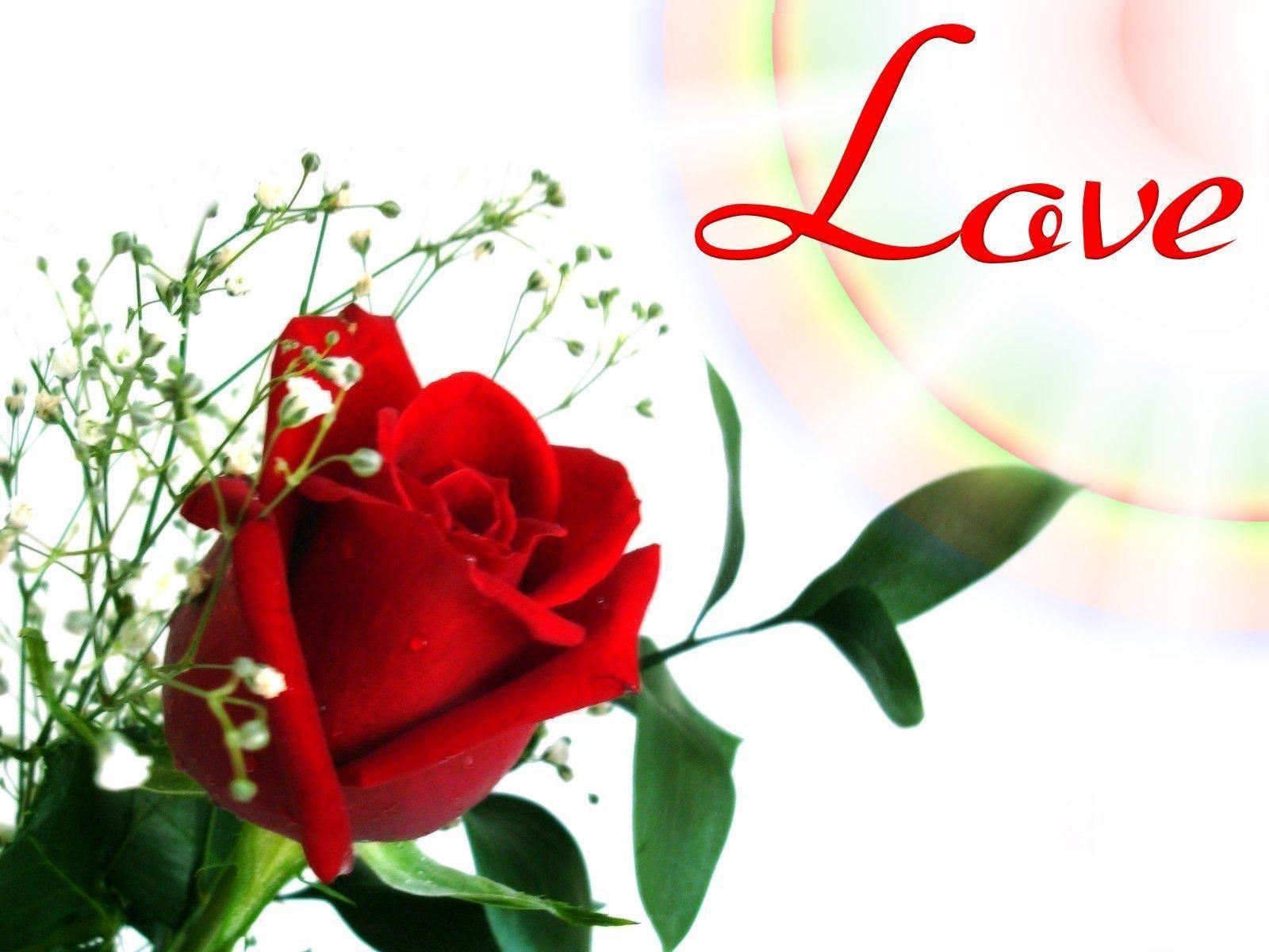 Pin By Mdhamid On Rahulkumar9878yahoo Gmail Com Red Flower Wallpaper Rose Flower Wallpaper Flower Wallpaper Love download rose flower wallpaper hd