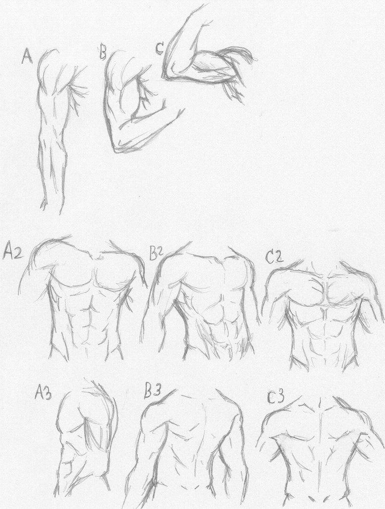 Muscle Anatomy Tutorial Sorta Xd Anatomy Tutorial Anatomy Art Anatomy Sketches