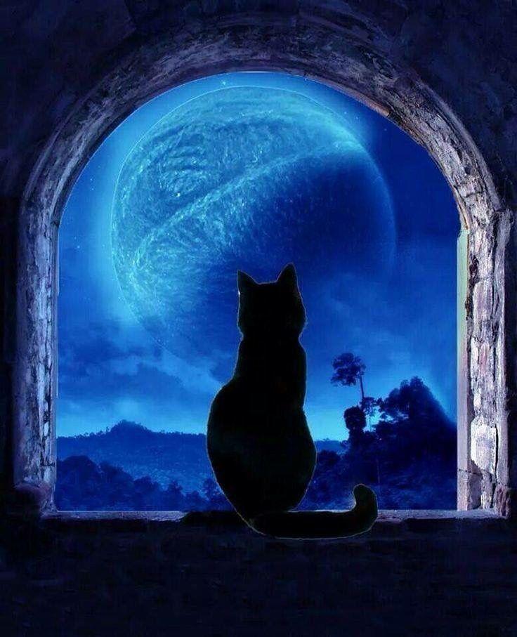 Черные кошки в ночи картинки