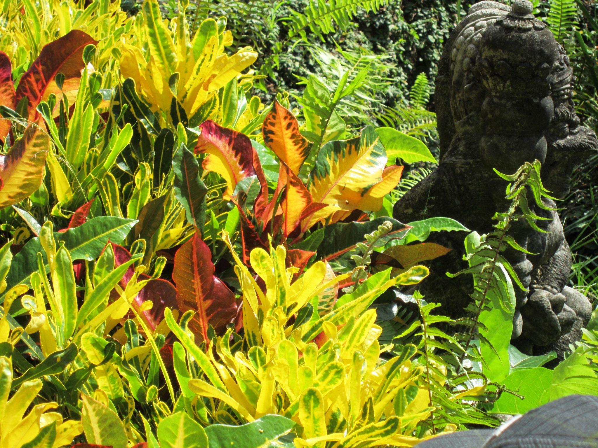 Bali garden   Bali garden, Tropical landscape design ...
