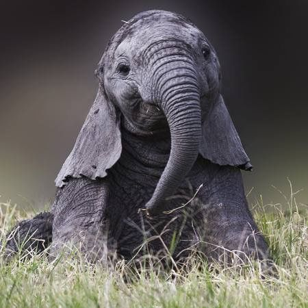 Baby elephant talented intelligent gentle magnificent - Cute elephant pictures ...